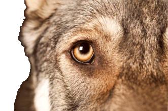 AHNAU ANIMALS - Beratungen für Menschen und ihre Tierfreunde